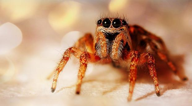 A Zebra Jumping Spider. Picture: UK Today