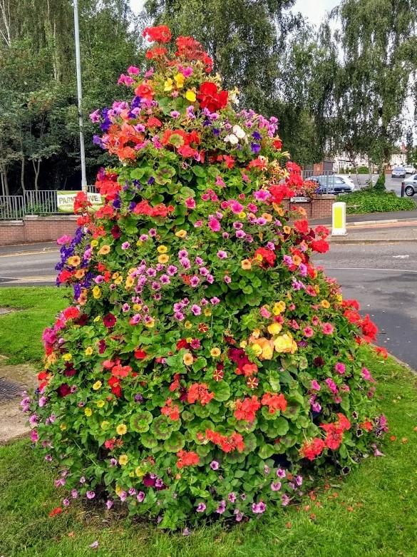 Stourbridge News: A floral display on the island by Park Road in Quarry Bank