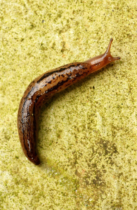 Slug it out with pests