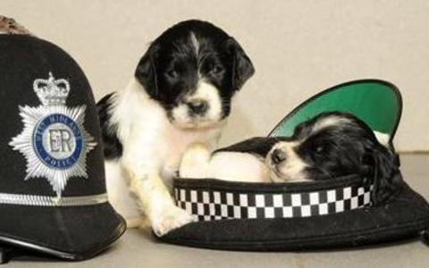 Police pups prefer cat-napping