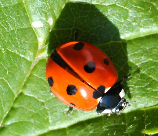 Borough residents invited to join bug hunt at Dudley nature reserve