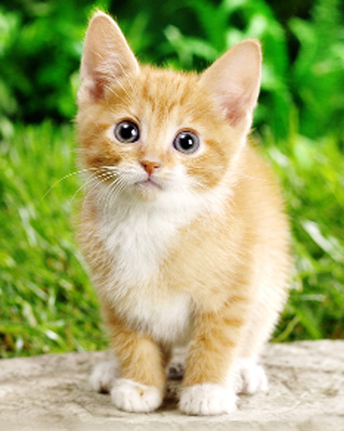 Cat lovers invited to fundraising event in Stourbridge