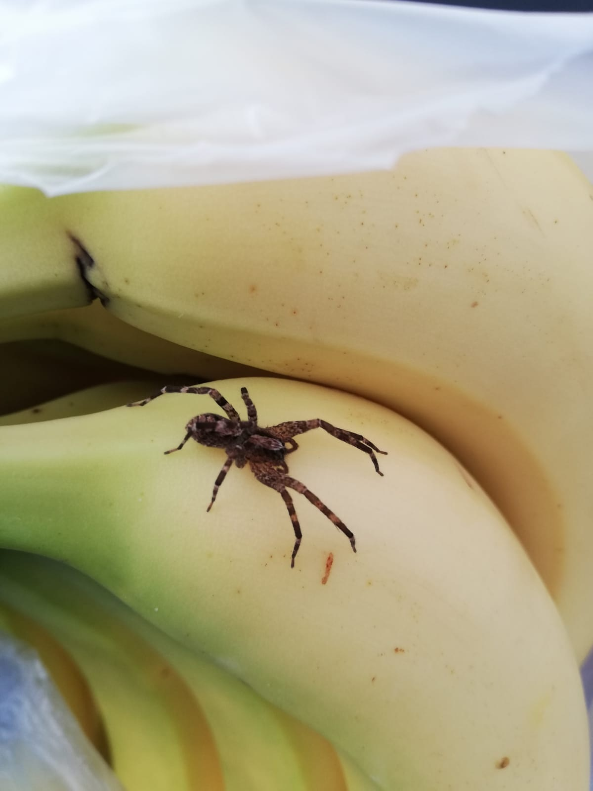 Shock as Brierley Hill supermarket staff find tropical spider